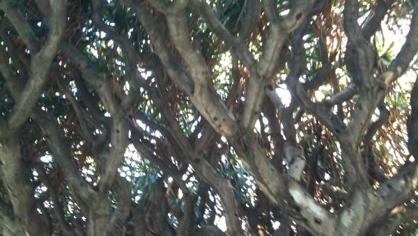 alberi_1972
